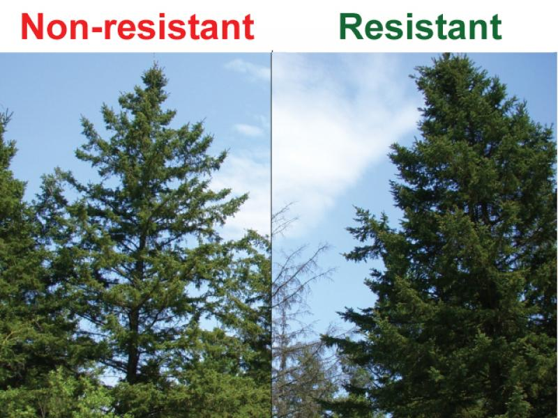 non resistant