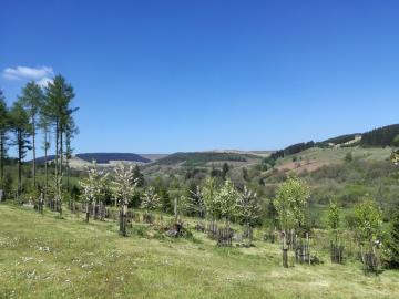 Brecon Beacons_tree left